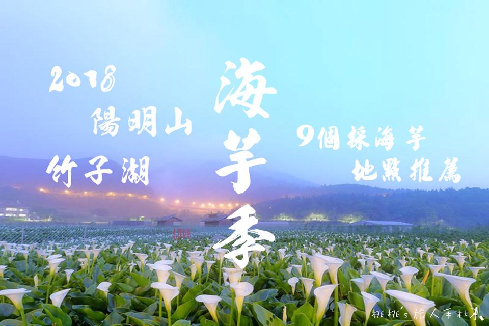 陽明山包車旅遊竹子湖採海芋