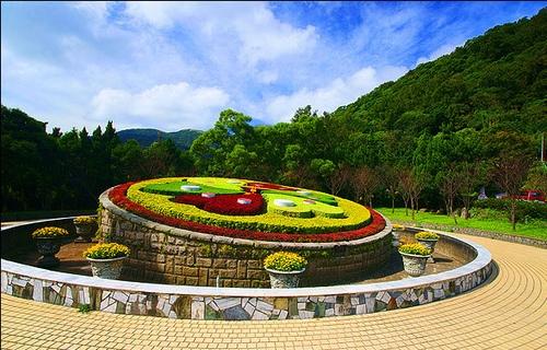 台北櫻花季節包車旅遊│陽明山包車一日遊