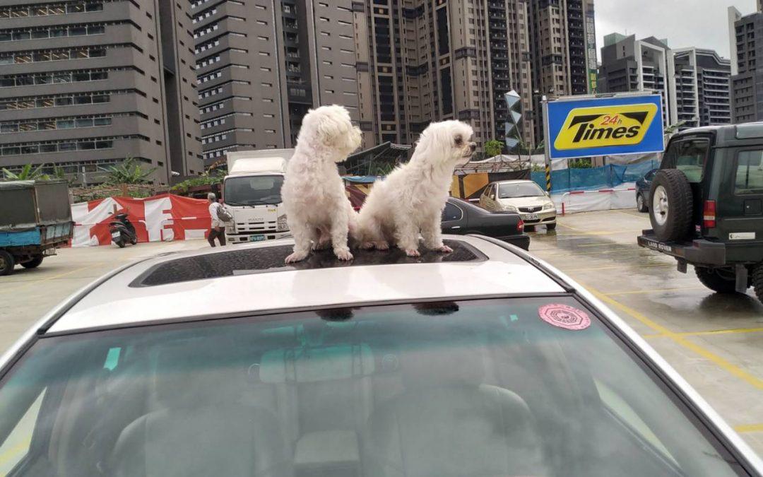 台北、台中旅遊包車一日遊程、價格