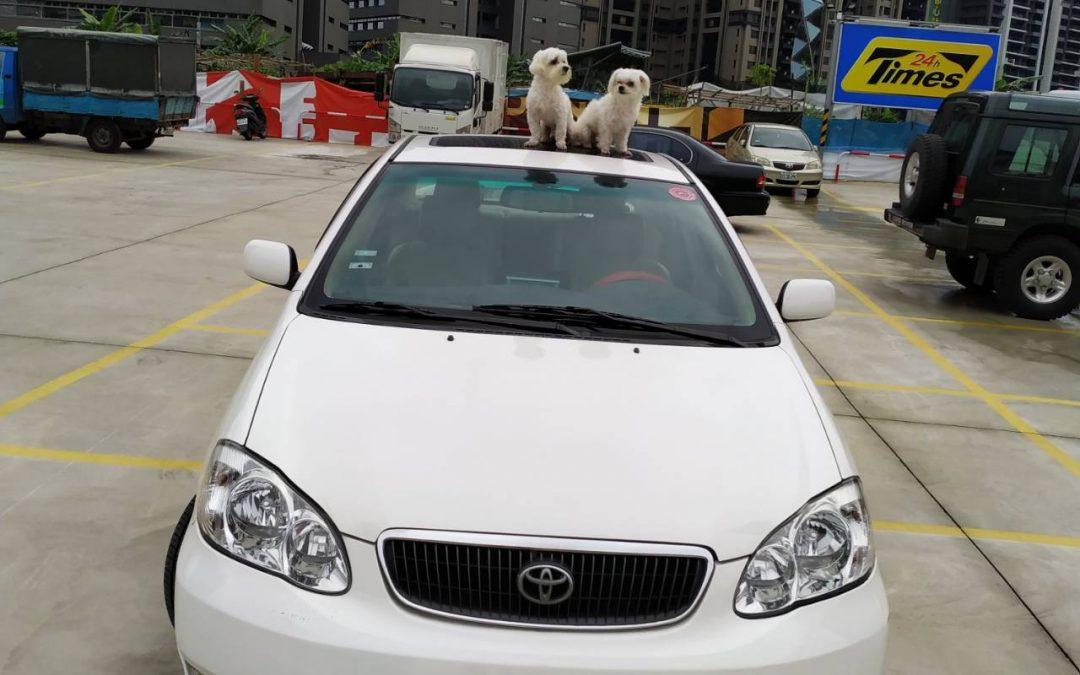 萌狗包車,寵物包車,寵物包車一日遊,萌狗包車推薦,狗狗包車