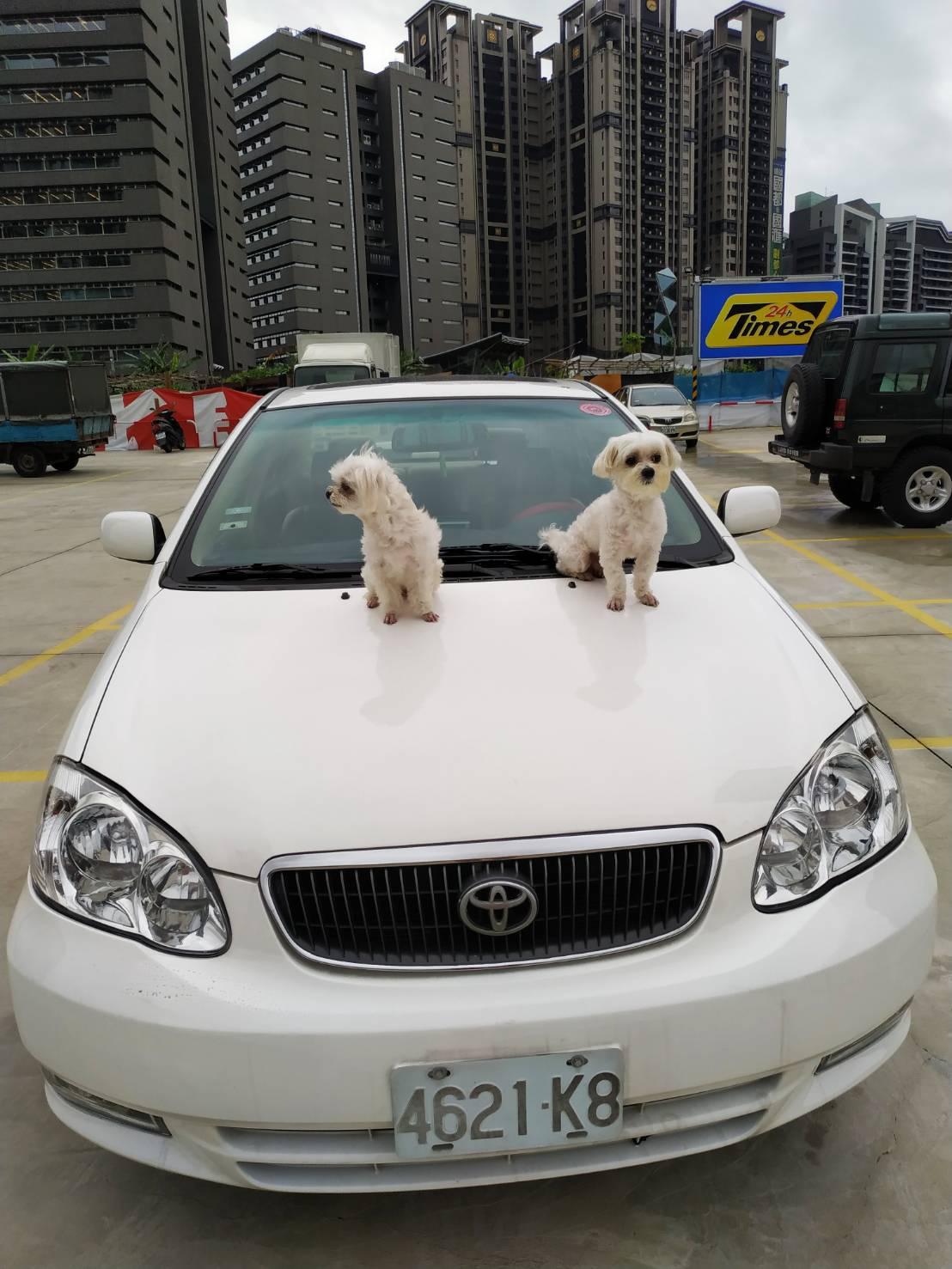 萌狗包車,寵物包車,寵物包車一日遊,萌狗包車推薦,狗狗包車 (8)