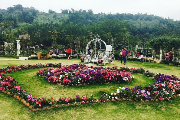 蘿莎玫瑰莊園-雲林包車景點推薦