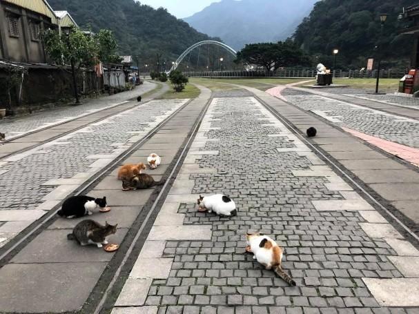 台北猴硐貓村旅遊包車,猴硐貓村包車景點,猴硐貓村包車旅遊景點,猴硐貓村包車一日遊,猴硐貓村旅遊包車一日,猴硐貓村