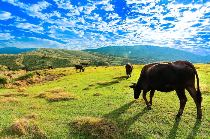 陽明山旅遊包車旅遊、花中、竹子胡、小油坑包車一日遊